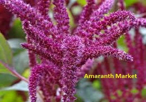 Amaranth Market