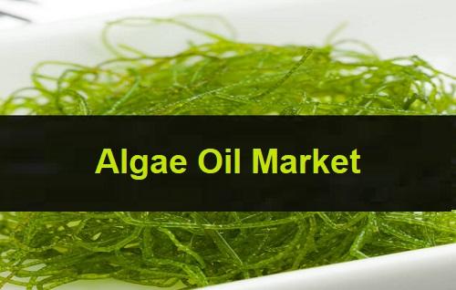 Algae Oil Market